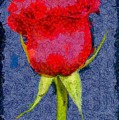 Rose - Id 16236-104956-0793 by S Lurk