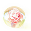 Rose In Glass by D R