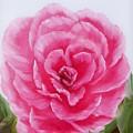 Rose by Joni McPherson