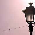Rose Light by Jez C Self