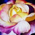 Rose by Melinda Etzold