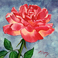Rose by Melissa Joyfully