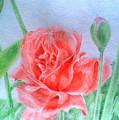 Rose by Nadi Sabirova