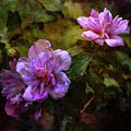 Rose Of Sharon 3943 Idp_2 by Steven Ward