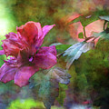 Rose Of Sharon On The Branch 4066 Idp_2 by Steven Ward