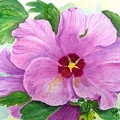 Rose Of Sharon by Peggy King