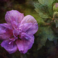 Rose Of Sharon With Buds 4697 Idp_2 by Steven Ward