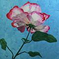 Rose On Blue by Nancy Sisco