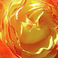 Rose Orange Yellow Roses Floral Art Print Nature Baslee Troutman by Baslee Troutman