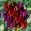 Rose Orchid by Mark W Ballard