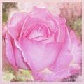Enjoy A Rose Soft Pastel by Mona Stut