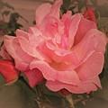 Rose   by Rosemary Meier