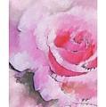Rose by Steve K