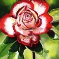 Rose by Tammy Crawford