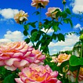 Rose To The Sky by Bennett Thompson