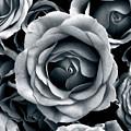 Rose Tones by Jessica Jenney