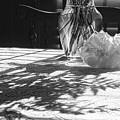 Rose Vase In Shadows Black And White by Joni Eskridge