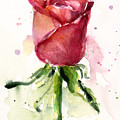 Rose Watercolor by Olga Shvartsur