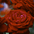 Rose by Wes Shinn