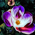 Rose With No Boundaries by Debra Lynch