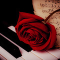 Rose With Sheet Music On Piano Keys by Garry Gay