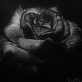 Rose by Yana Gifford