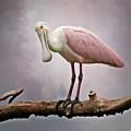 Roseate Spoonbill Costa Rica by Joan Carroll