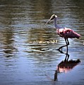 Roseate Spoonbill by Diann Fisher