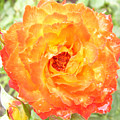Rosegarden No. 22 by Ramon Labusch
