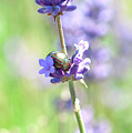 Rosemary And Lavender by Bonnita Moaby