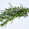 Rosemary Isolated On White by Bruce Block