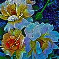 Roses Aglow by Gwyn Newcombe