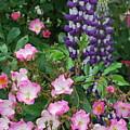 Roses And Lupines by Linda Sramek