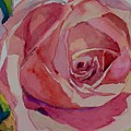 Roses And More  by Jo Mackenzie