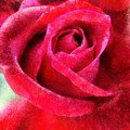 Roses Are Red by Krissy Katsimbras