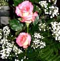 Roses Are Truly Beautiful  by Sunaina Serna Ahluwalia