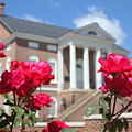 Roses At The Court House 2 by Joseph C Hinson Photography