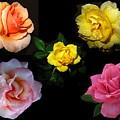 Roses Beautiful by Joyce Dickens