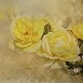 Roses Delight by Eva Lechner