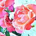 Roses Galore by Gwyn Newcombe