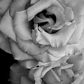 Roses In Black And White by LKB Art and Photography