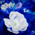 Roses In Bllue by Debra Lynch
