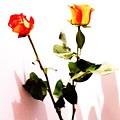 Roses In The Light by Lori Mahaffey