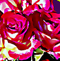 Roses by John Toxey
