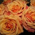 Roses by Linda Hardin