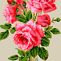 Roses On Stripe by Brenda Kean