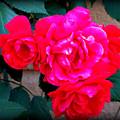 Roses On Stucco by Lisa Jayne Konopka