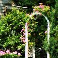 Roses On Trellis by Susan Savad