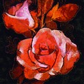 Roses Painted And Drawn by Catherine Lott