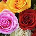 Roses by Phyllis Denton